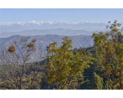 Camp Purple, Mukteshwar, Kumaon