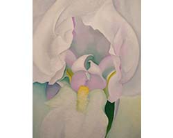 White Iris, painting by Georgia O'Keeffe at Virginia Museum of Fine Arts, Richmond, VA